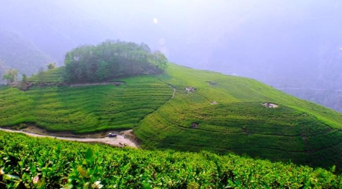 Bhotechaur.everest.teagarden